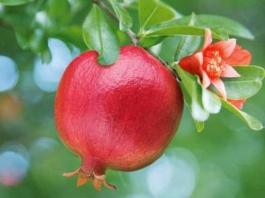 अनार के 19 फायदे स्वास्थ्य लाभ Anar Ke Fayde Pomegranate benefits in Hindi