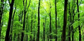 पृथ्वी पर कविता हिन्दी में - Poem On Earth Day in Hindi Font