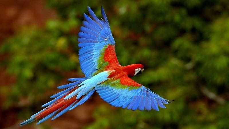 पंछी पर हिन्दी कविता - Poem On Birds in Hindi Language