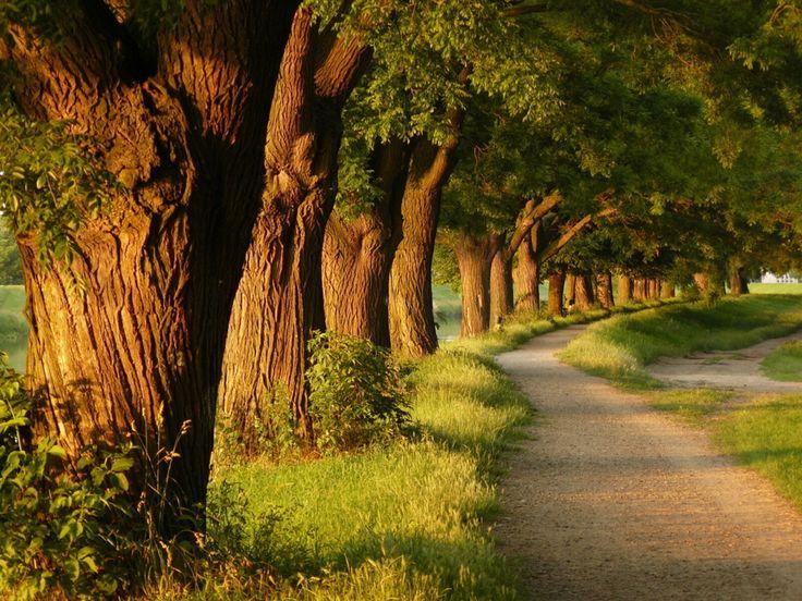 पेड़ बचाओ स्लोगन - Slogan On Save Trees in Hindi Font