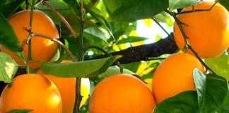 Orange Fruit Benefits in Hindi Santra Upyog Karne Ka Tarika