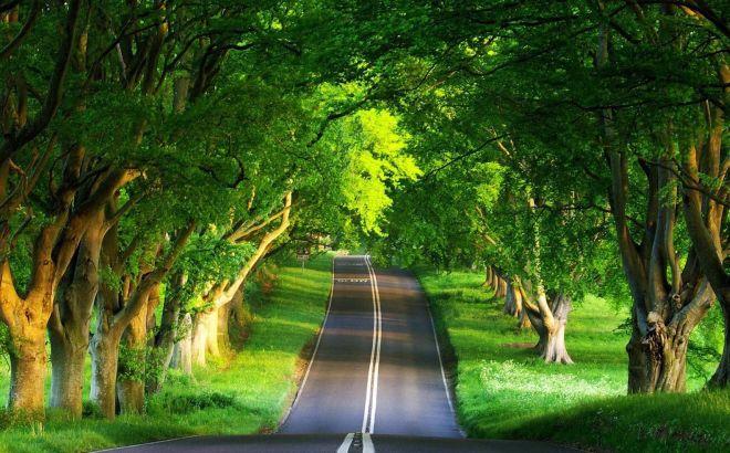 Short Essay On Importance Of Trees in Hindi Language ped lagao paryavaran bachao jeevan desh
