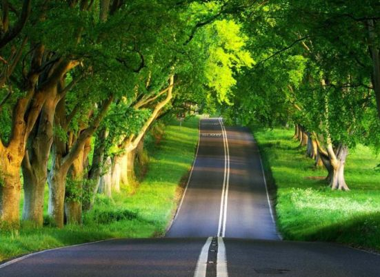 पेड़ बचाओ कविता हिन्दी में || Poem on trees in Hindi language font save tree