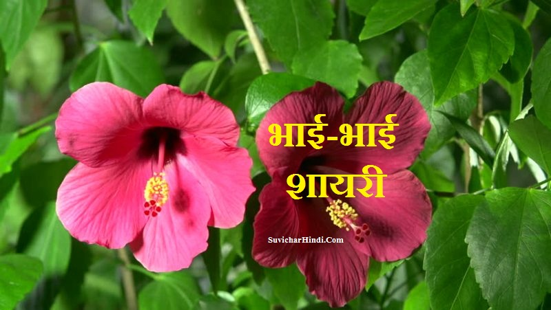 भाई-भाई शायरी हिंदी में - Bhai Bhai Shayari Hindi Mai Big Brother Shayari Status Quotes