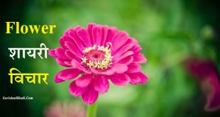 Flower Shayari Quotes Status in Hindi