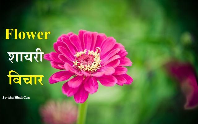 Flower Shayari Quotes Status in Hindi